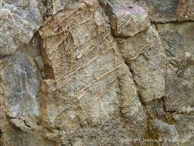 Rock texture in Carboniferous Pembroke Group Limestone at Three Cliffs Bay