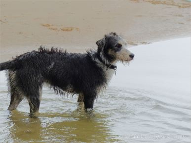 Cute wet dog more interested in splashing in pools than eating stranded shellfish