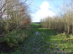 English countryside view of muddy lane