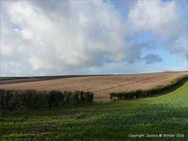English countryside view of cut hedge between ploughed and planted fields