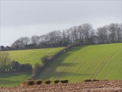 English winter countryside view with fields and hedges