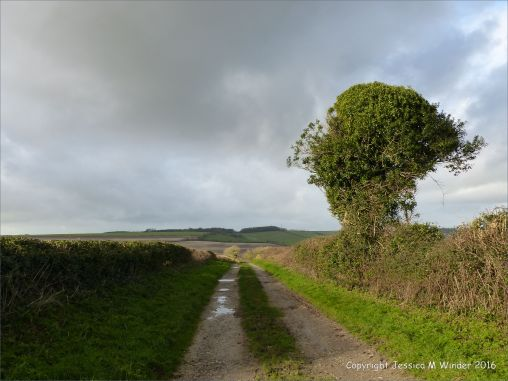View of country lane