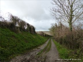 English countryside view of rutted lane with hedge borders