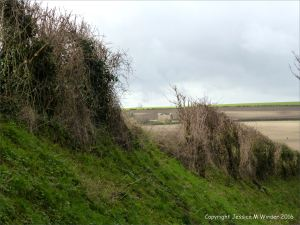 English countryside view with view of fields through a gap in a hedge