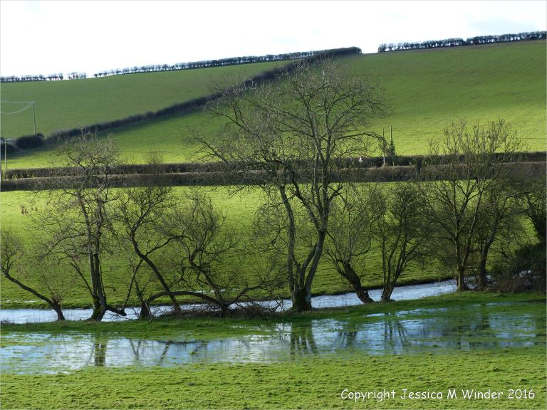 Water-logged sheep pasture by the River Cerne