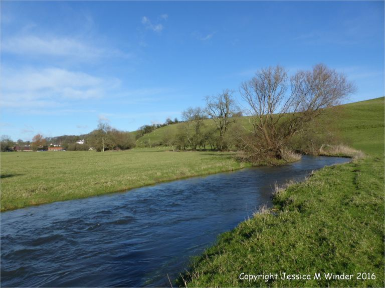River swollen to the top of the banks near Charminster