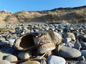 Flotsam shoe washed ashore on pebbles