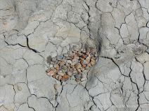 Natural fracture patterns in drying mud