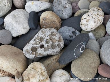 Pebbles from Carboniferous Period rocks at Langland Bay
