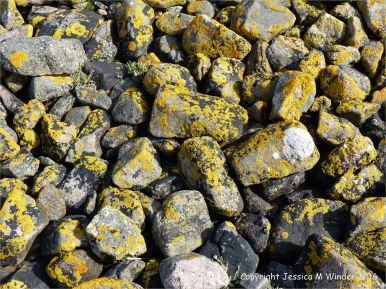 Pebbles Jessica S Nature Blog Page 2
