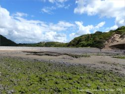 Ancient peat bed at Threecliff Bay in Gower, South Wales