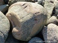 Beach boulder with aplite vein in L'Eree Granite