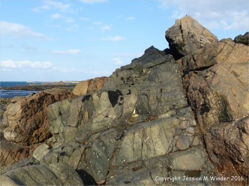 Weathered rock surface texture and pattern on an albite dolerite dyke on Guernsey