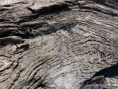 Close-up of the intricate pattern of woodgrain in ancient wood preserved by peat.