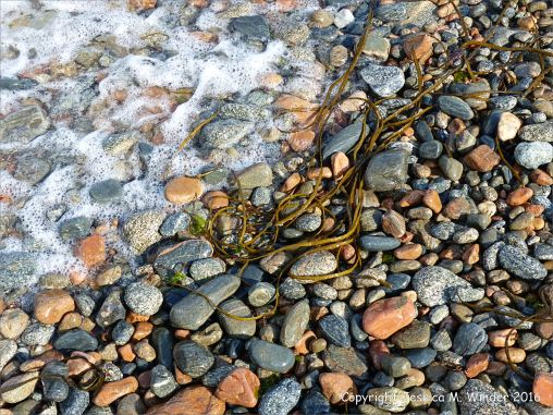 Wet pebbles with seaweed and seafoam on the beach at Havelet in Guernsey