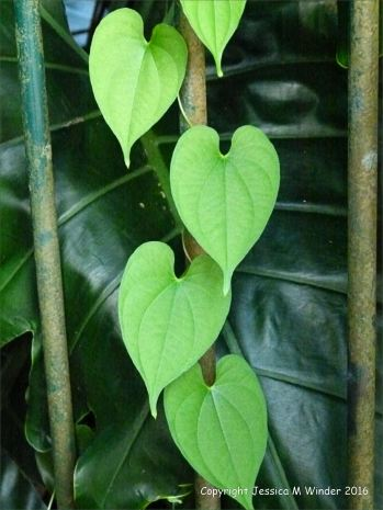 Natural patterns in plants
