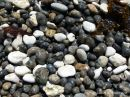 Black and white wet pebbles on a Dorset beach