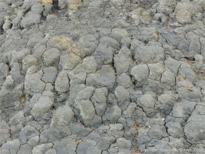 Texture and pattern in drying mud on the beach at Seatown in Dorset, England.
