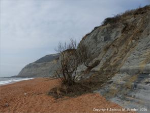 Cliff face on the western shore at Seatown, Dorset, England