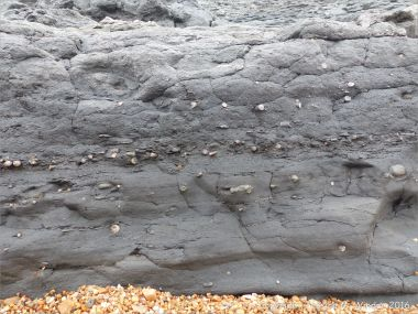 Layers of belemnites and other fossils in the cliff at Seatown, Dorset, England.