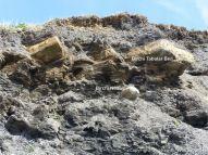 Birchi Tabular Bed and Birchi Nodule in cliff at Charmouth, Dorset