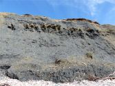 Cliff face at Charmouth composed of Shales-with-Beef from the Charmouth Mudstone Formation and with Birchi Nodules