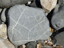 Beach stone with pattern of white calcite veins