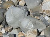 Beach stones with patterns of white calcite
