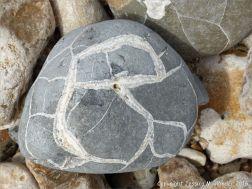 Beach stone with pattern of white calcite veins