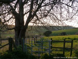 Stile by an old horse chestnut tree on the Cerne Valley footpath