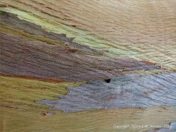 Natural pattern on a Eucalyptus tree