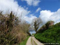 English country lane in Spring