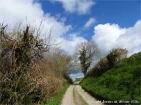 English country lane in Spring