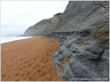 Context shot of Seatown Beach where all the trace fossil burrows were photographed