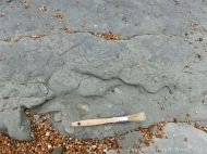 Trace or ichno fossils of marine invertebrate burrows