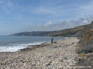 Charmouth beach where there are many stones with holes made by sea creatures. View looking west.