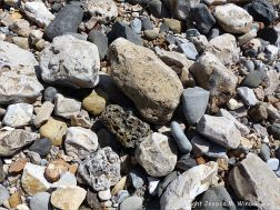 Beach stones including one with holes made by marine invertebrates at Charmouth, Dorset, England.