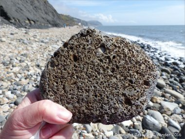 Beach stone with holes made by marine invertebrates at Charmouth, Dorset, England.