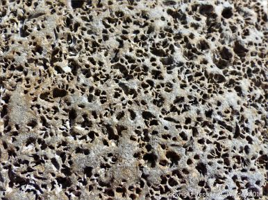 Close up of rock with small holes that are mostly burrows made by marine worms