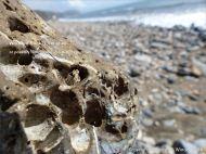 Beach stone with holes made by marine invertebrates at Charmouth, Dorset, England.