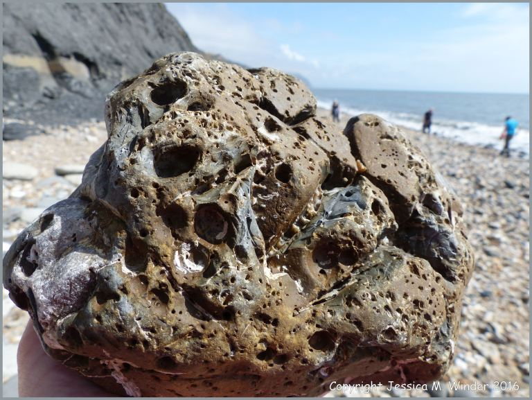 Beach stone with holes made by seashore creatures at Charmouth, Dorset, England.
