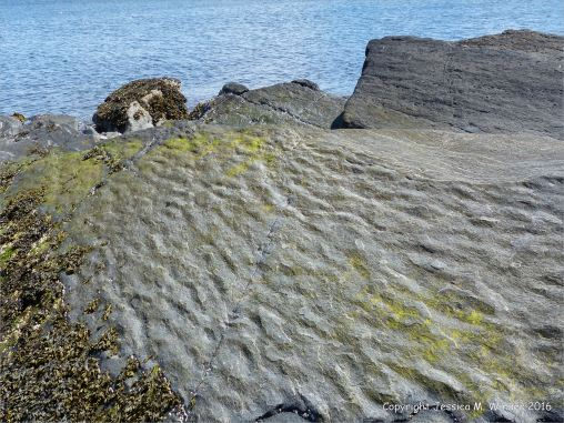 Turbidity current ripples preserved in rock
