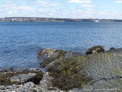 Turbidity current ripples preserved in rock at Black Rock Beach, Point Pleasant Park, Halifax, Nova Scotia.