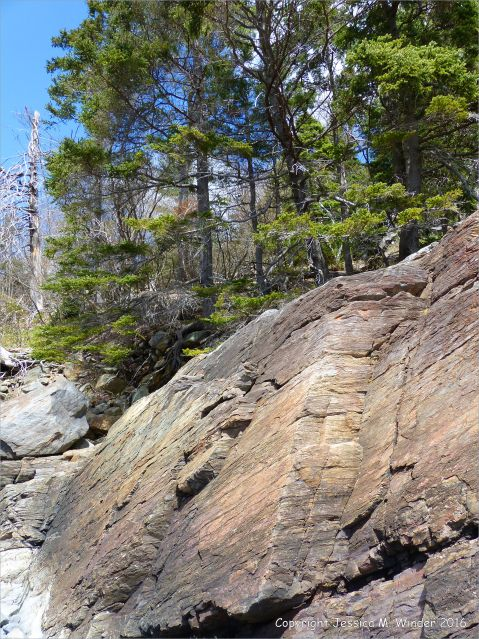 Bluestone Formation rocks at Point Pleasant Park, Halifax, Nova Scotia.