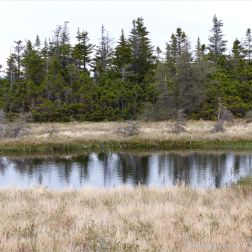 Trees reflected in still dark water in a bog along the Cabot Trail