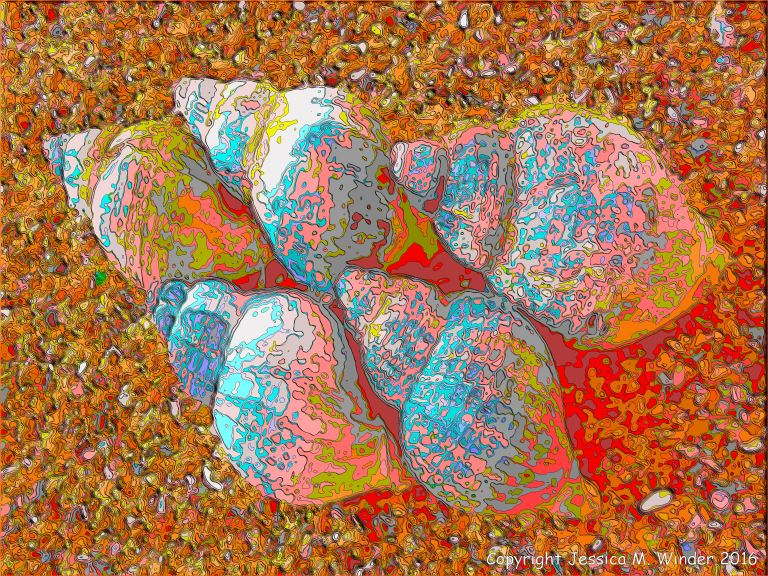 Brightly coloured picture of whelk shells