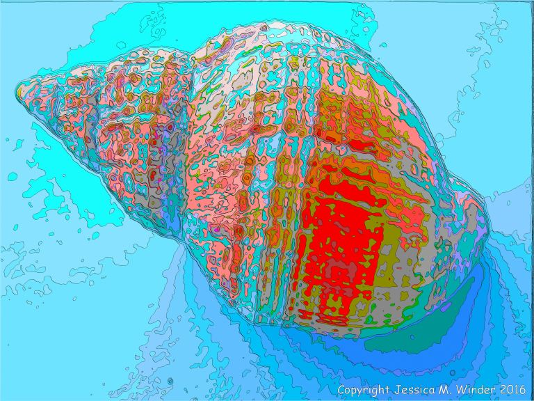 Brightly coloured picture of a whelk shell