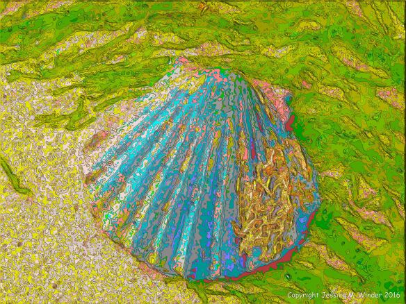 Brightly coloured picture of a scallop shell on the beach