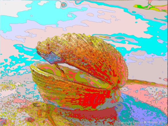 Brightly coloured picture of a warty venus shell shell on the beach
