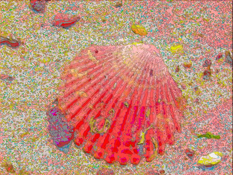 Picture of a scallop shell on a sandy beach